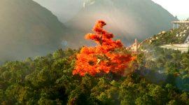 Elcrys tree